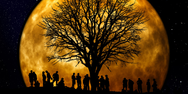 0403-wp-tree-by-afia-pixabay