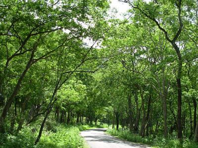 marayoor-sandalwood-forest-munnar1